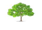Burley Cricket Club